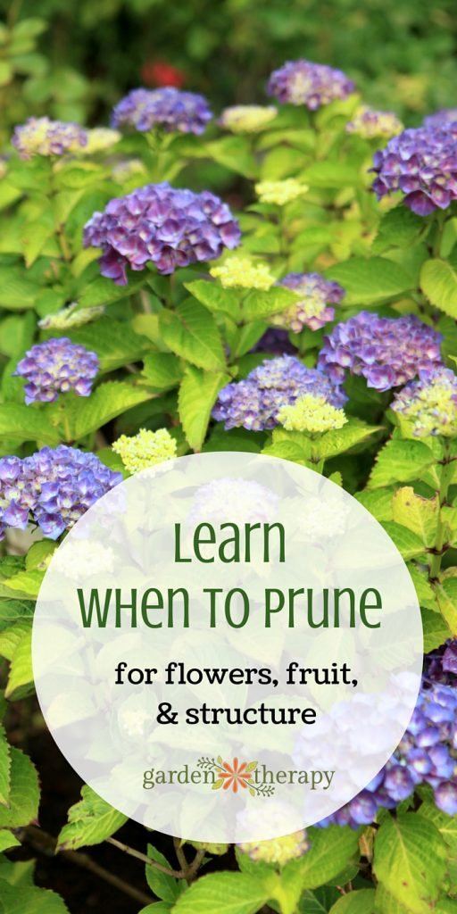 Want to Know WHEN to Prune? This Will Answer All of Your Questions!