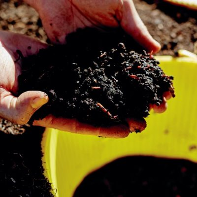 Worm Plunger: a Brilliant Solution for Small Garden Composting