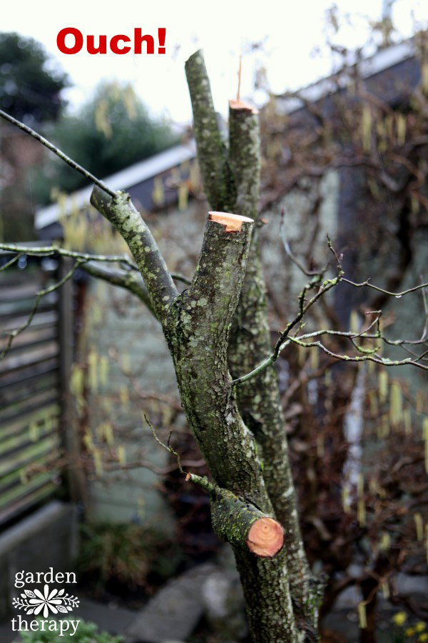 Please don't ever do this to a tree (pruning 101)