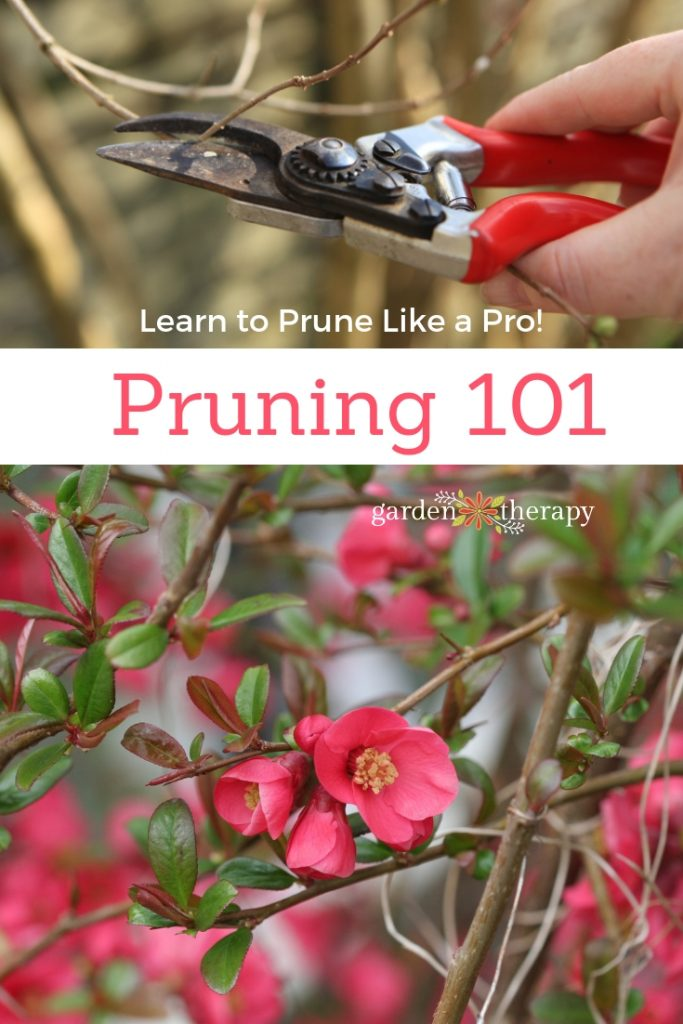 Pruning 101 How to Prune Like a Pro