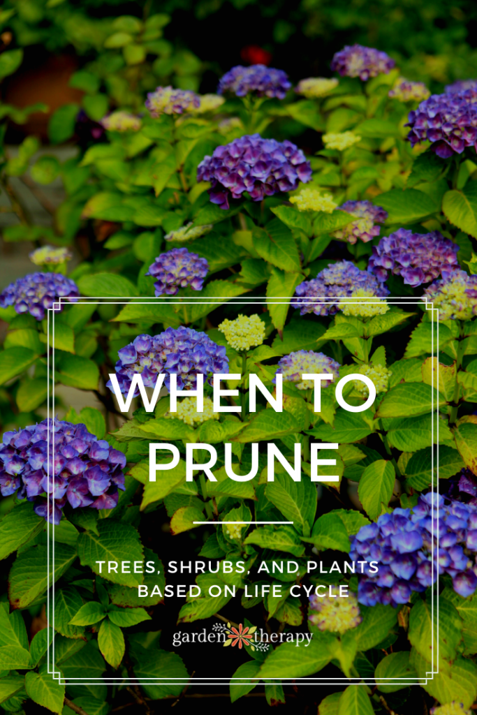 When to Prune Trees Shrubs and Plants