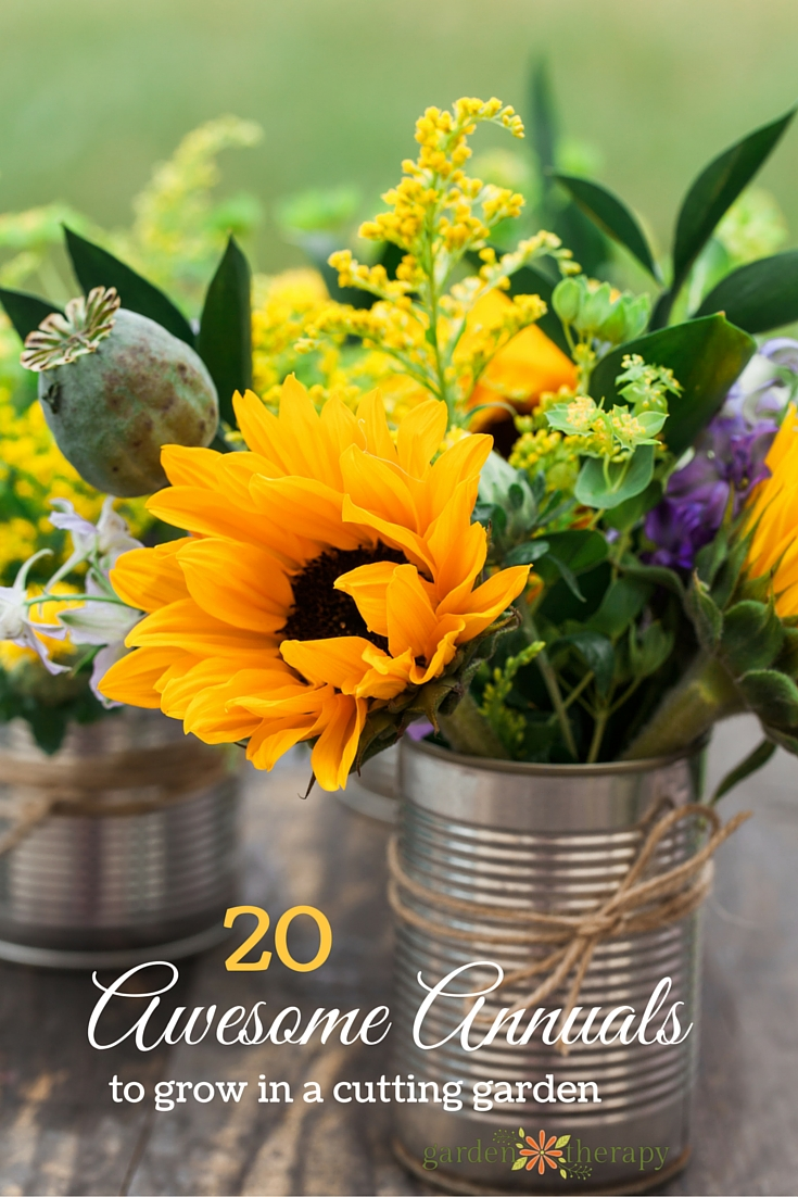 20 annuals to grow in a cutting garden