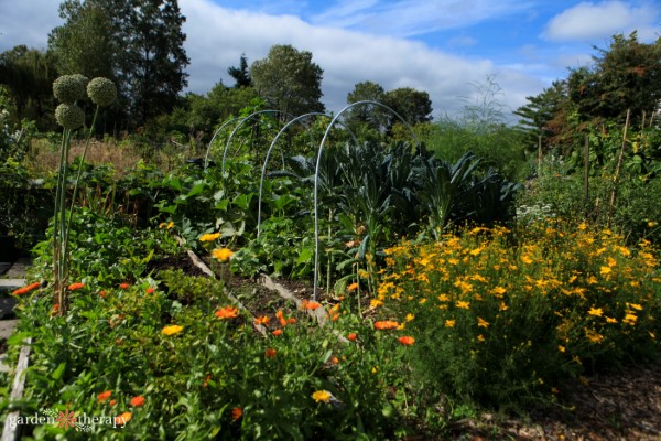 a garden full of companion planting flowers