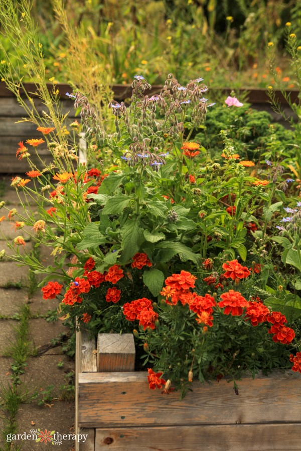 companion planting with flowers