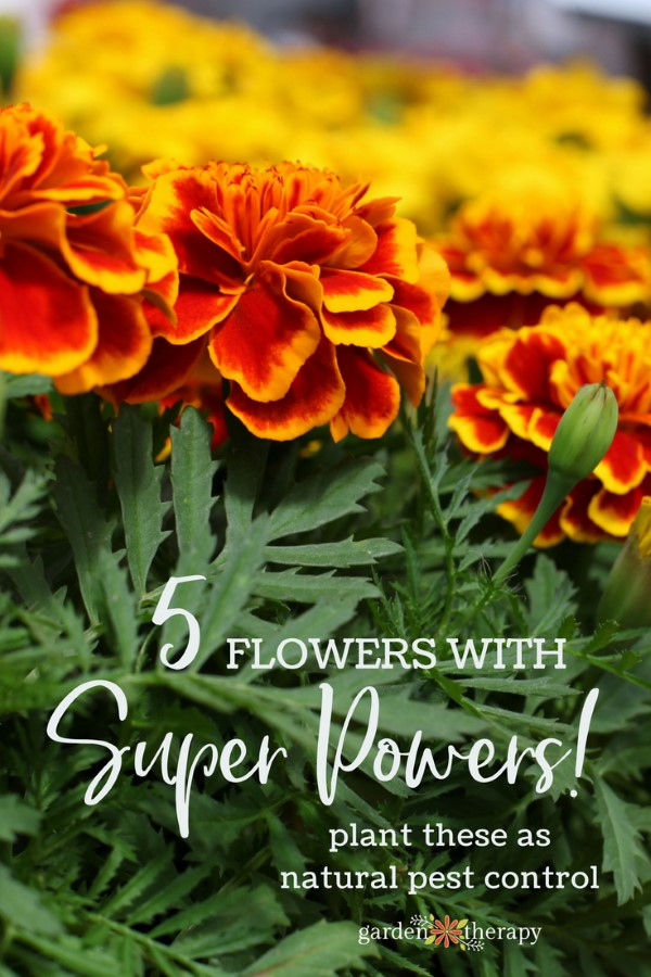 5 flowers with super powers: plant these as natural pest control