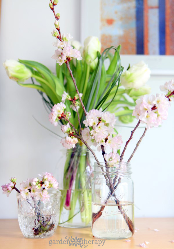 Forcing Flowering Branches and Tulips in Mason Jars