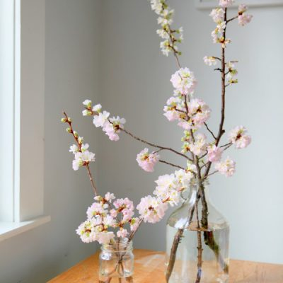 Forcing Flowering Branches to Bloom Indoors