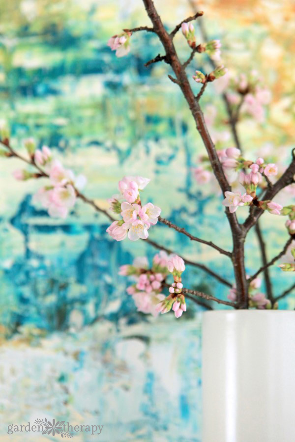 Forcing Flowering Branches indoors in front of colorful painting