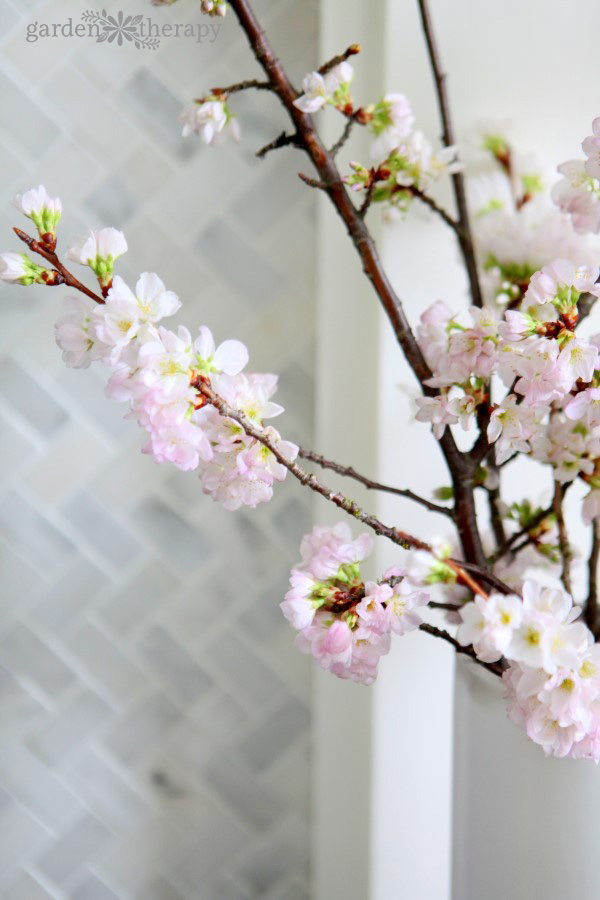 Forcing Flowering Cherry Blossom Branches in front of marble tile