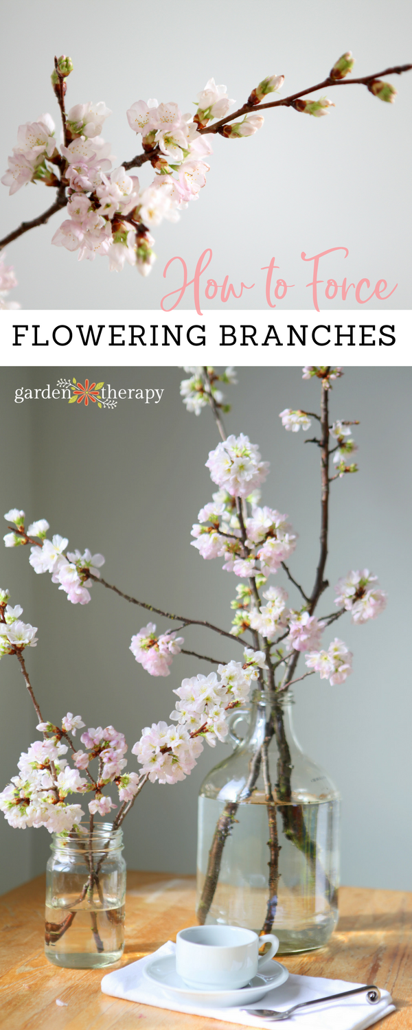 Forcing flowering branches in water