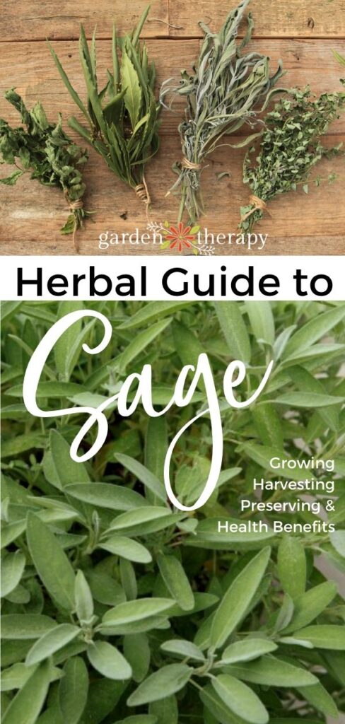 Herbal Guide to Sage