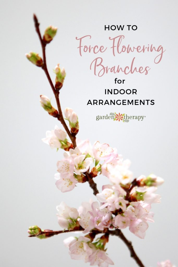 How to Force flowering branches in water for Indoor Arrangements