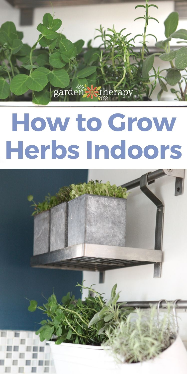 How to Grow Herbs Indoors (Successfully)
