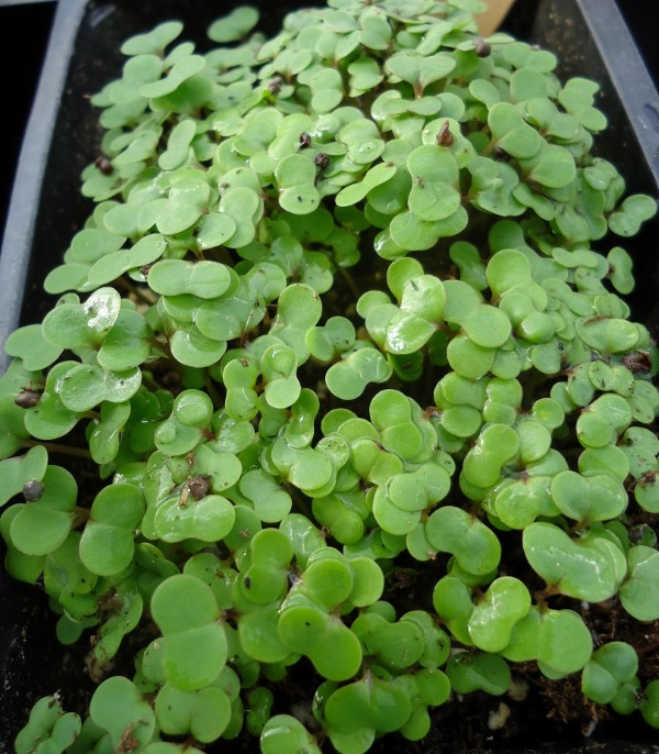 How to Host a Back Yard Plant Sale (seedlings)