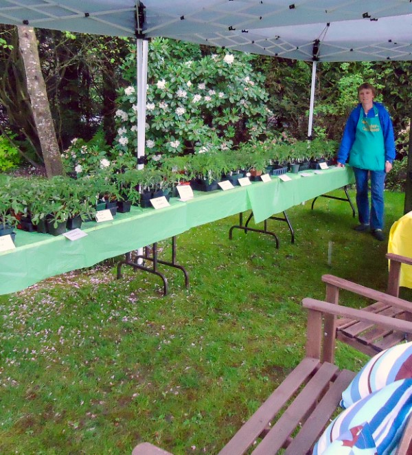 How to Host a Back Yard Plant Sale (table display)