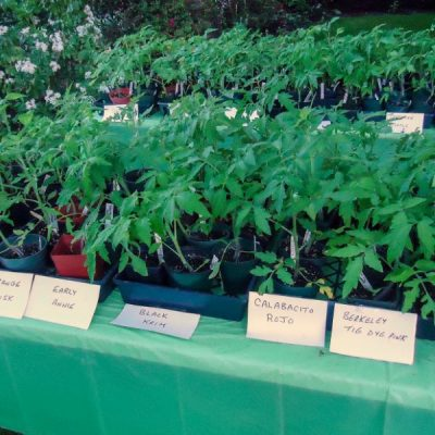 Can Your Green Thumb Turn into Green? Tips from a Plant Sale Pro