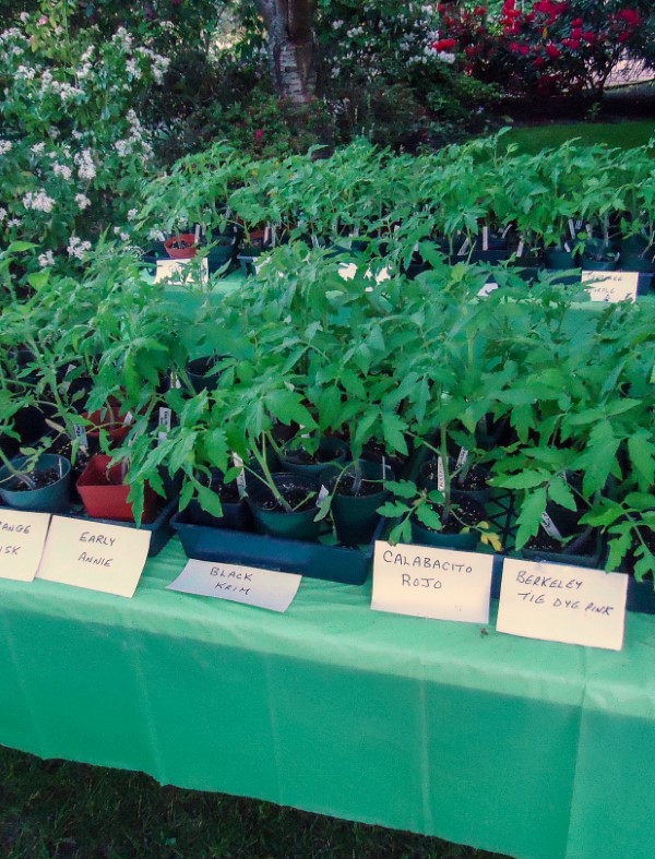 How to Host a Back Yard Plant Sale (tomatoes)