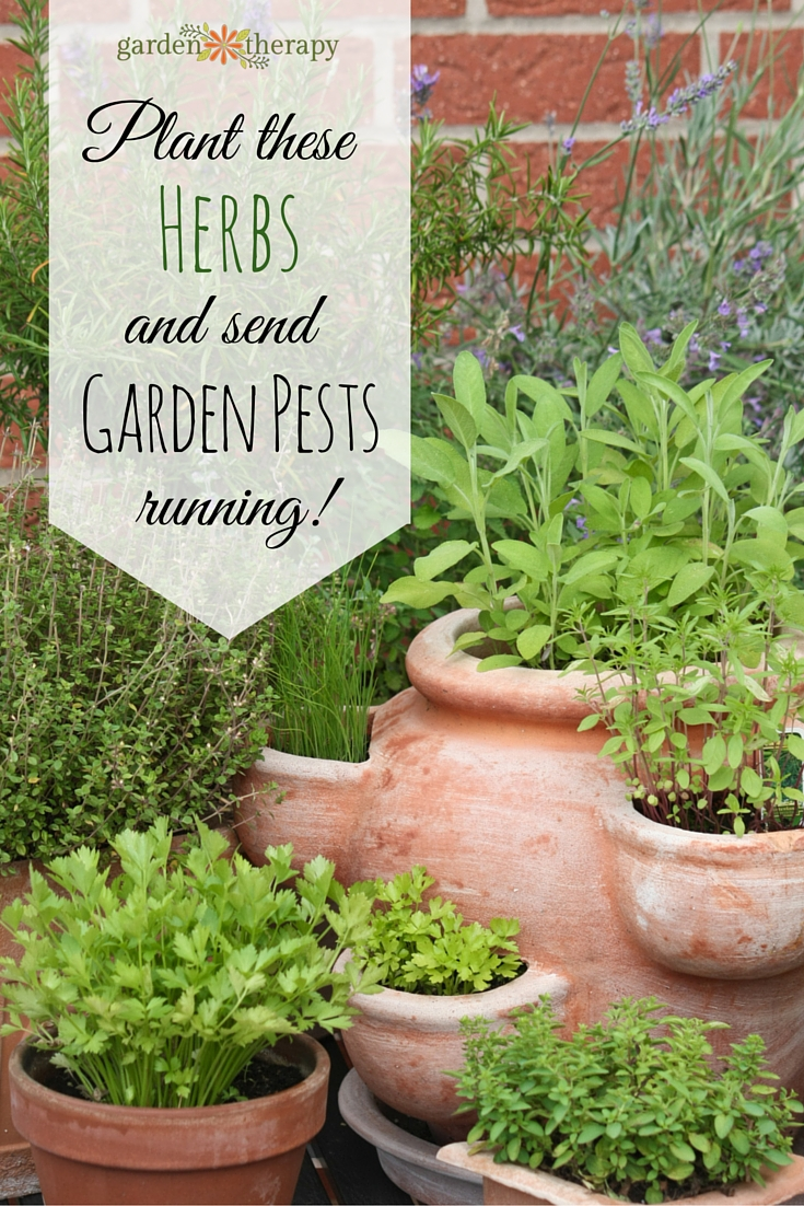 Plant these 9 herbs and send garden pests running