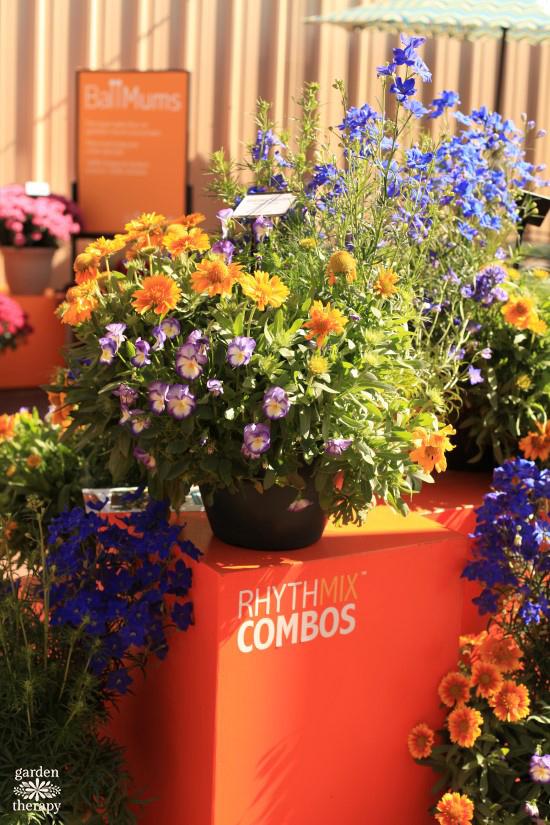 Rhythmix Perennials