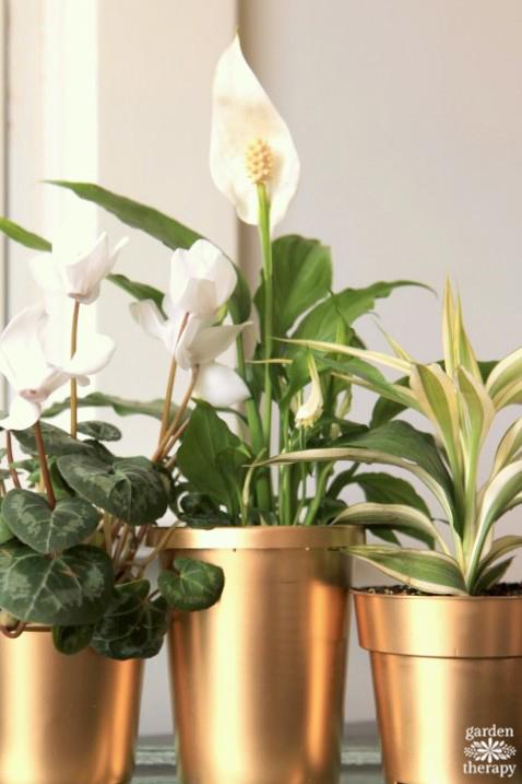 24 karat gold plant pots DIY instructions and tips