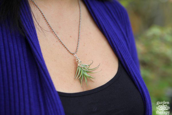 Air Plant Necklace Garden Therapy