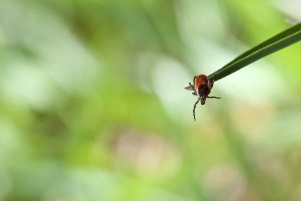 All About Ticks And Lyme Disease Prevention