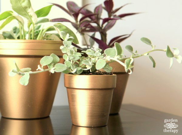 Gold Painted pot with brushed texture