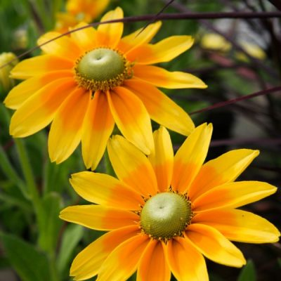 The Best Perennials for Sun