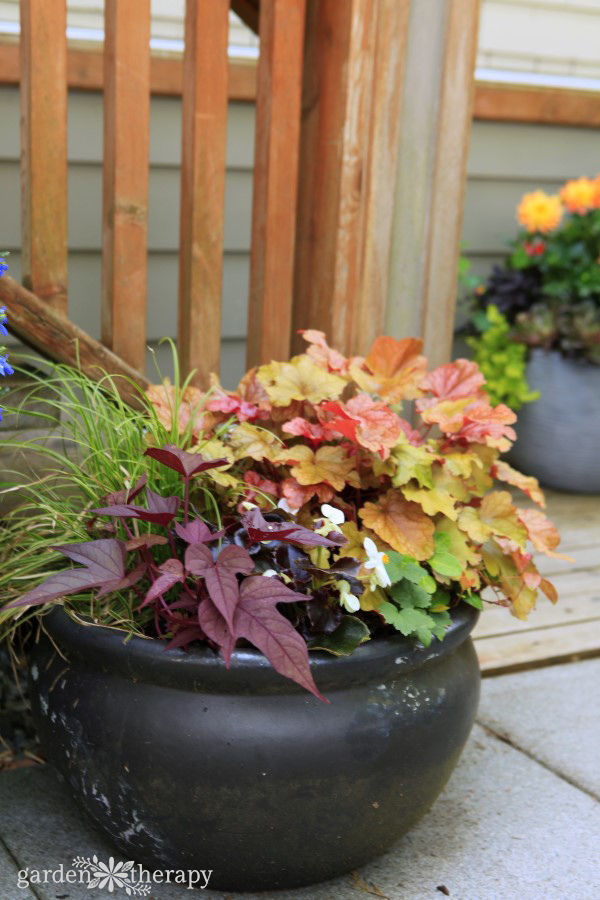 Heuchera shade planter recipe
