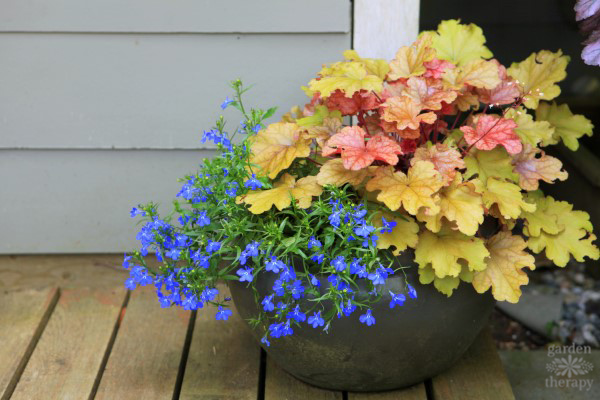 Heuchera shade planter with lobelia