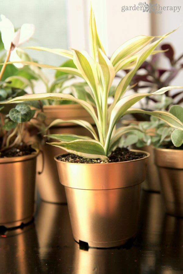 How to get brilliant shine on these DIY gold painted pots