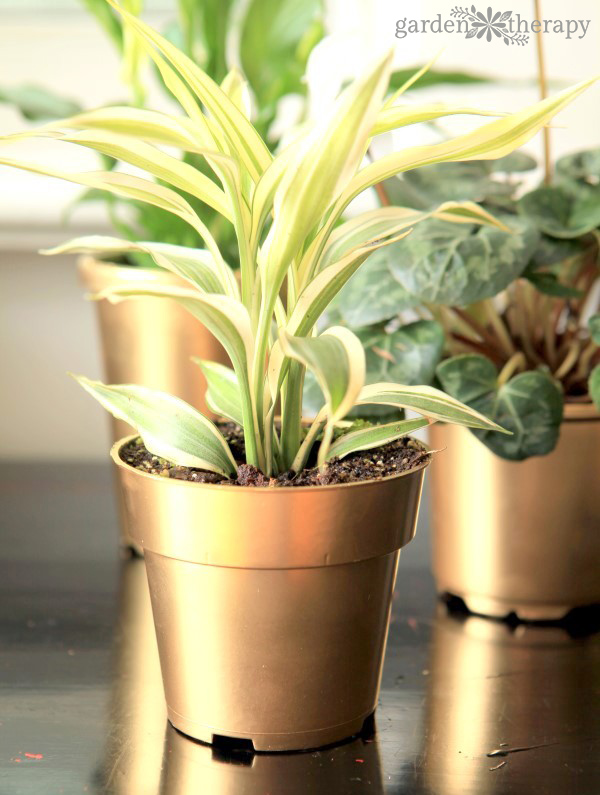 How to transform plant pots with gold paint so they really shine