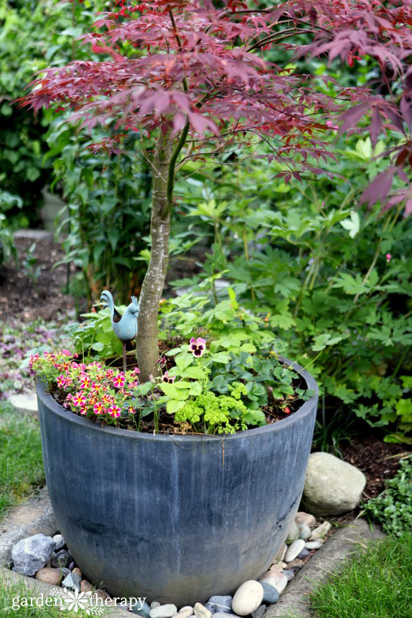 Japanese Maple Planter