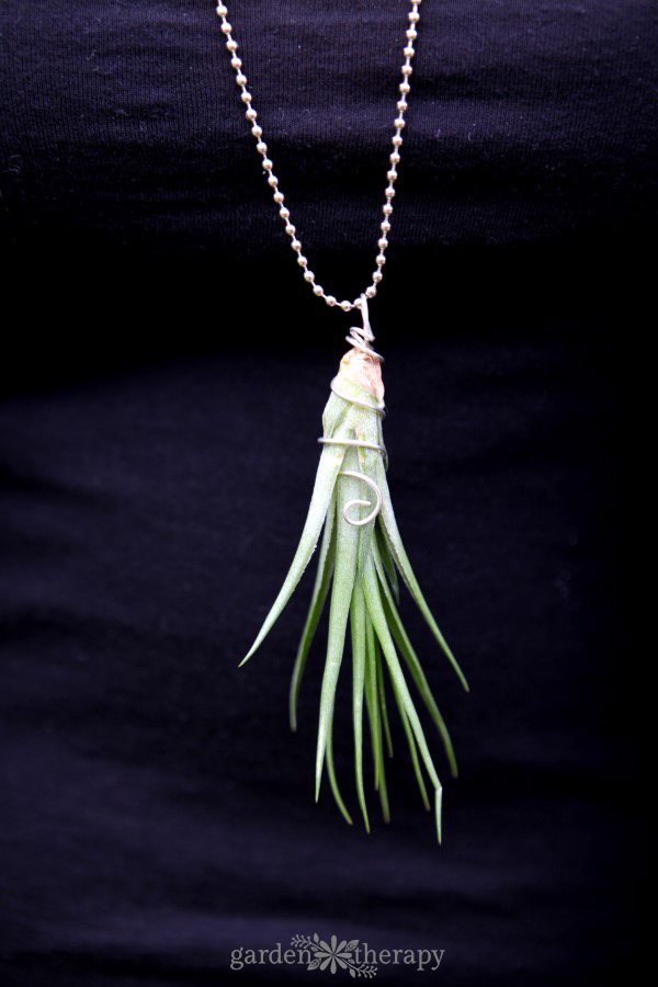 Long Air Plant Necklace Garden Therapy