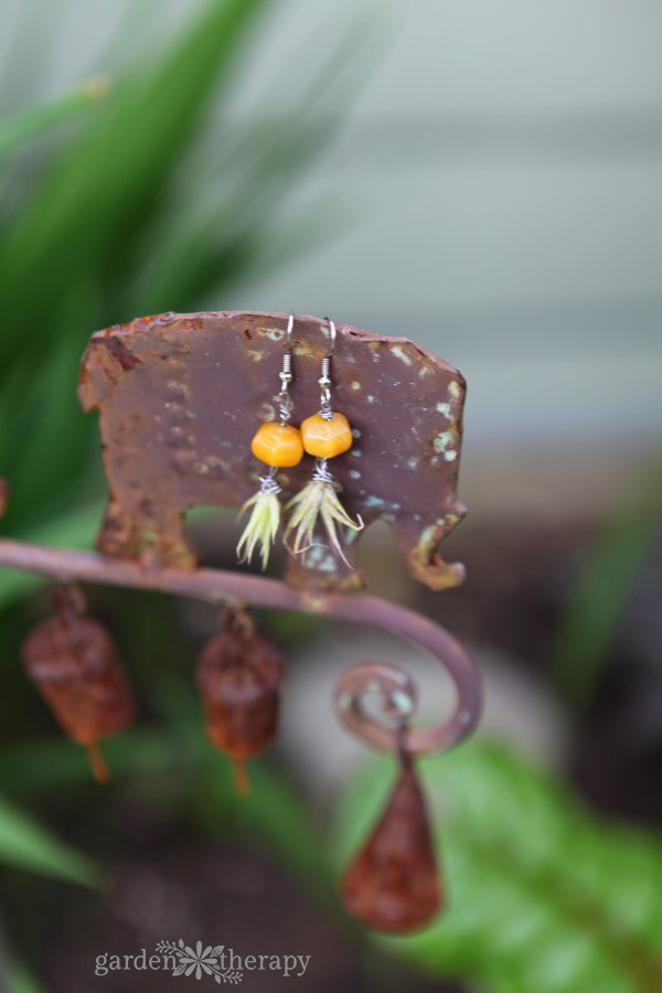 Orange Bead Air Plant Earrings Garden Therapy