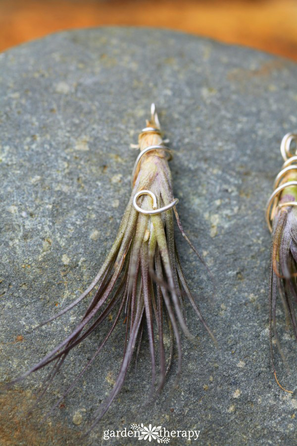 Purple Air Plant Necklace Garden Therapy