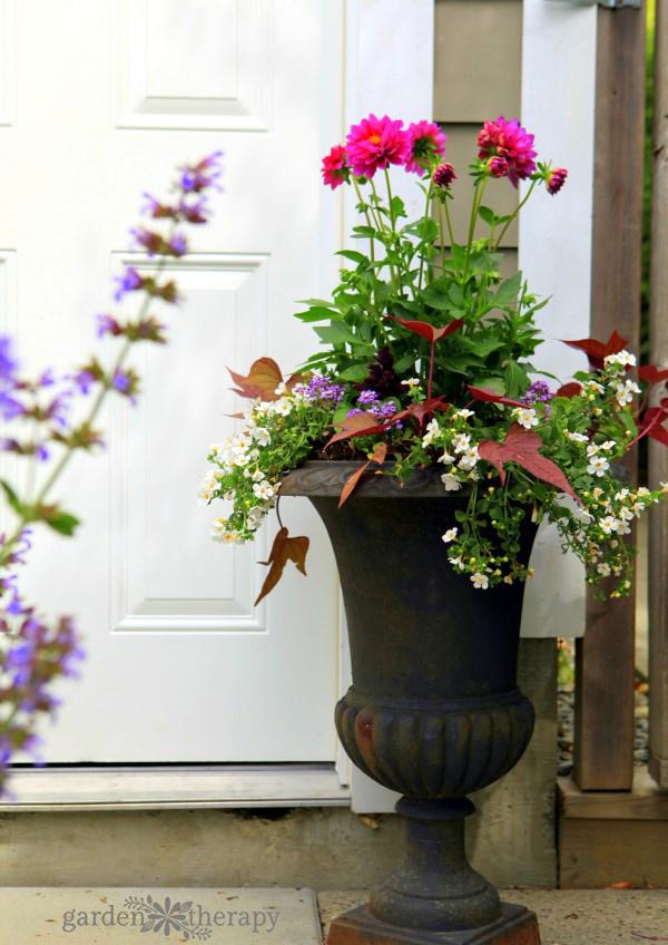 Sun loving planter combination