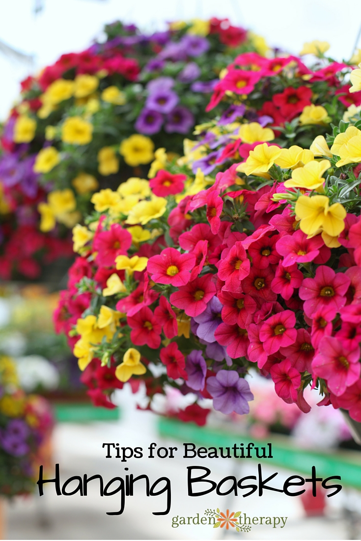 Tips and ideas on growing beautiful hanging baskets