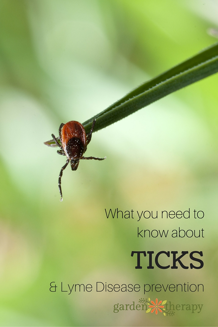 What you need to know about ticks and Lyme Disease Prevention