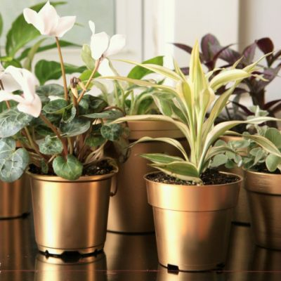 My Gilty Pleasure: Gold Painted Flowerpots
