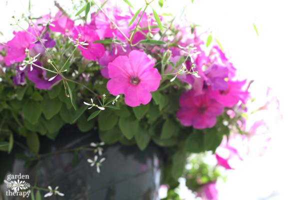 Grow Beautiful Hanging Baskets With These Tips