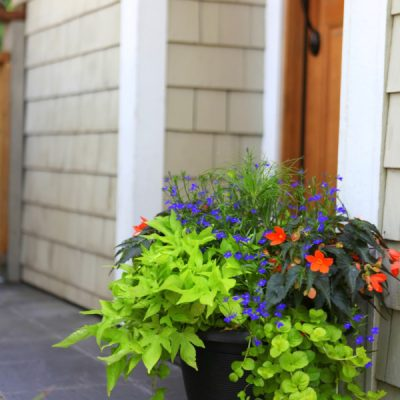 Decorative Ideas for Creating a Summer Container Garden