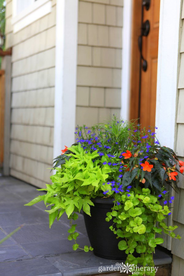 shade planter combination for front door entry