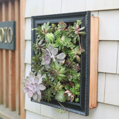 Succulents So Many Ways! Creative Projects that Celebrate Succulents