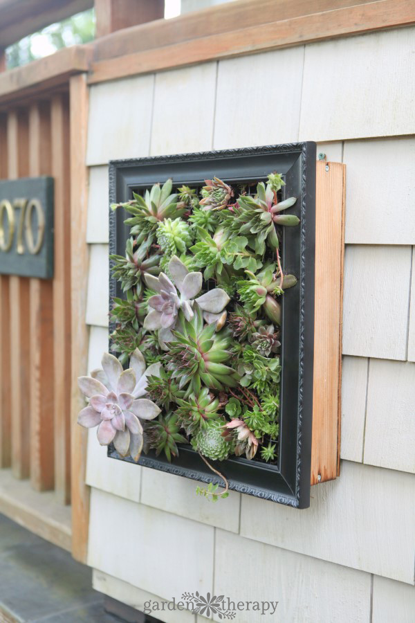 succulent wall art frame DIY from Garden Made