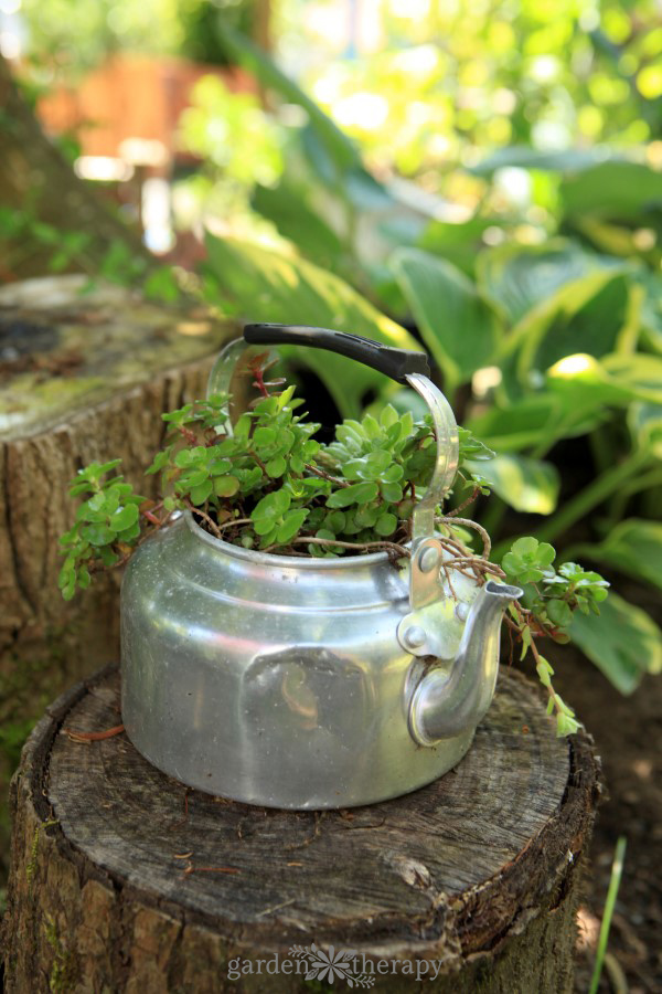 tea kettle succulent planter