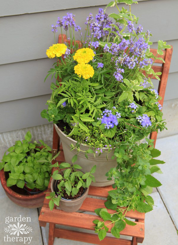 A Mosquito Repelling Container Garden Arrangement for the Deck or Patio