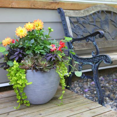 Stunning Container Garden Design Anyone Can Do