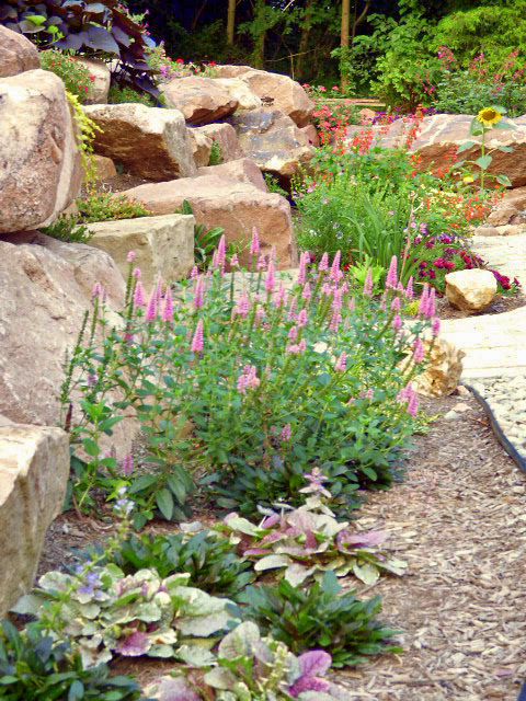 Drought-tolerant planting in rock wall gardens