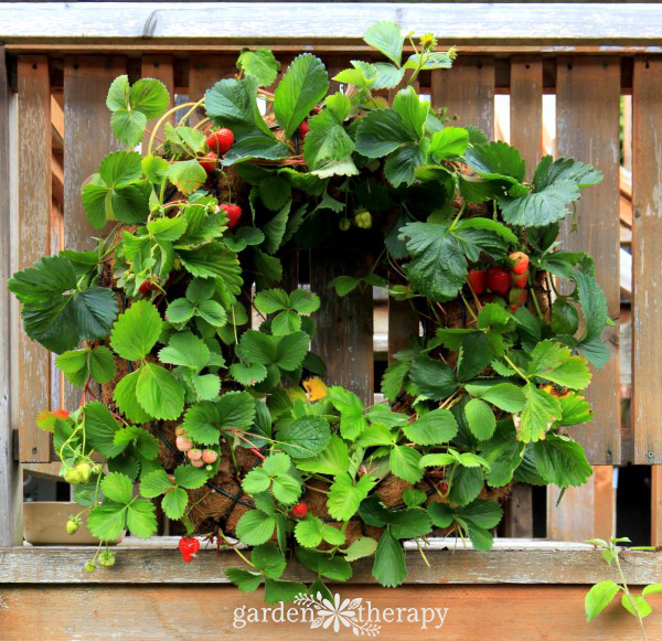 How to Make a Strawberry Wreath
